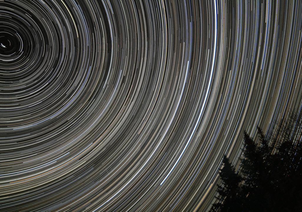 Seven hours of star trails over dark trees